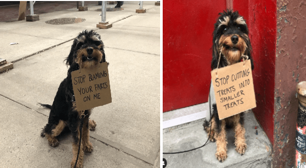 dog carrying protest signs on instagram | cute scruffy dog holding a sign in its mouth. STOP BLAMING FARTS ON. STOP CUTTING TREATS SMALLER TREATS.