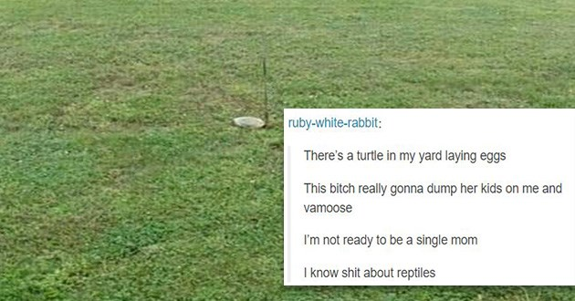 turtle eggs tumblr funny wildlife nanny animals lol | ruby-white-rabbit There's turtle my yard laying eggs This bitch really gonna dump her kids on and vamoose not ready be single mom know shit about reptiles