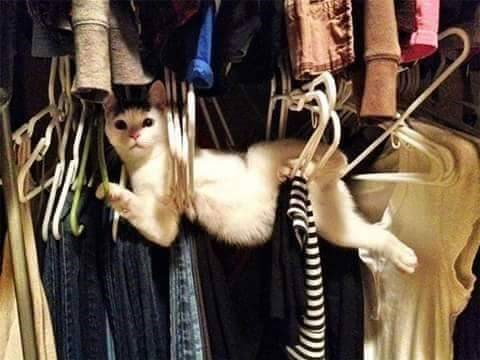 cats funny pics cute animals aww lol | white cat tangled up in some clothes hangers inside a closet