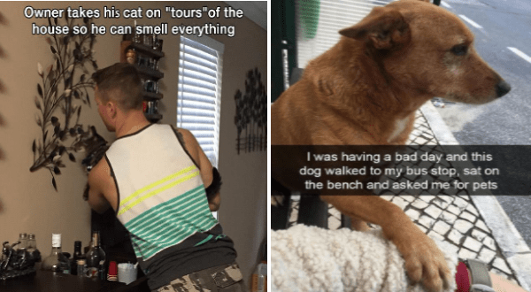 "wholesome animal memes | man holding a cat up so it can reach a wall decoration. Owner takes his cat on ""tours house so he can smell everything. having bad day and this dog walked my bus stop, sat on bench and asked pets."
