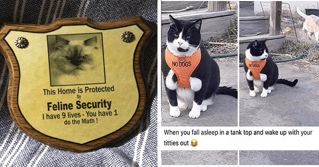 cats funny cat memes lol dump meme | badge with a photo of an angry looking cat: This Home is Protected Feline Security have 9 lives have 1 do Math ! chonky cat in a too small vest that reads NO DOGS on it. fall asleep tank top and wake up with titties out
