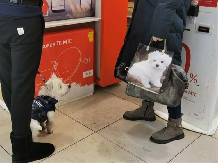 Amazing animal photos | cute fluffy dog in a sweater looking at a bag with a photo of a similar looking dog