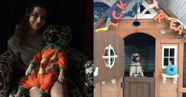 costume dogs pug halloween pugs - 1021189