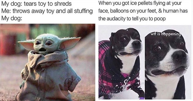 dog memes funny doggo lol | baby yoda meme My dog: tears toy shreds throws away toy and all stuffing My dog. pics of a dog wearing a coat looking alarmed in the snow. got ice pellets flying at face, balloons on feet human has audacity tell poop wtf is happening