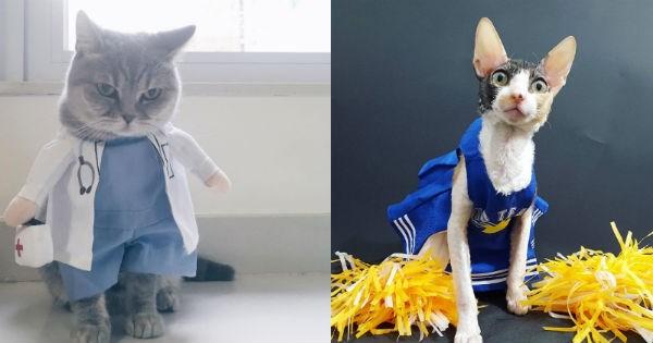 costume,halloween,Cats