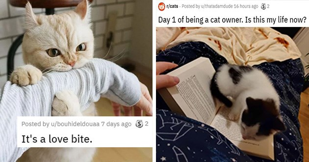 cats struggles funny cute lol aww animals reddit | Posted by bouhideldouaa love bite. Cat chomping a human's arm. posted by thatadamdude Day 1 being cat owner. Is this my life now? kitten walking around an open book while a person is trying to read from it