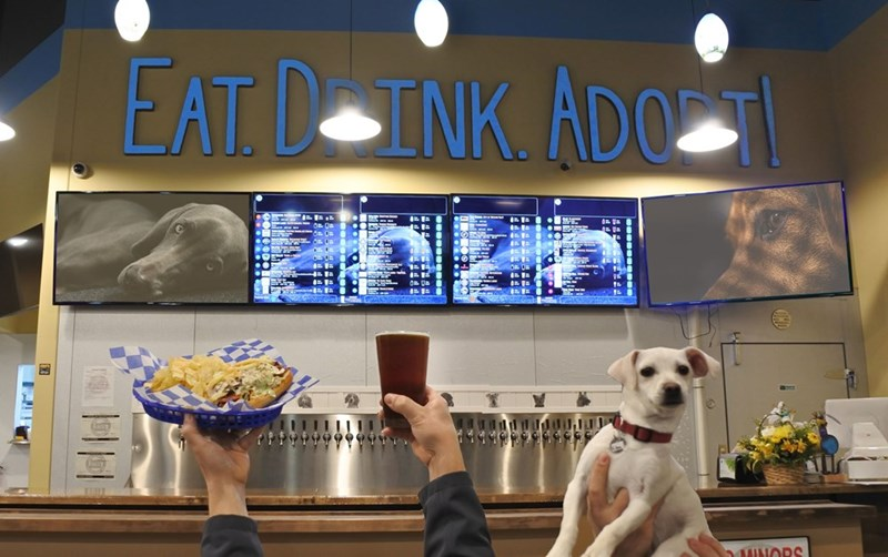 first bar for rescue dogs | backdrop of a bar with screen showing photos of dogs and a sign that read EAT. DRINK. ADOPT! a plate of food, a beer and a dog are held up in the air in front of the backdrop.