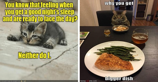 lolcats funny cat memes | kitten lying on the ground looking defeated: know feeling get good night's sleep and are ready face day? Neither do l. cat sitting at a table in front of a small plate of food looking at the bigger plate the human is getting: why get bigger dish