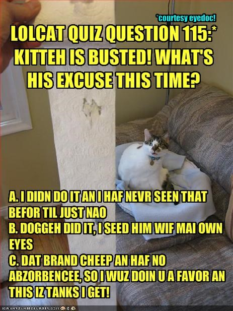 LOLCAT QUIZ QUESTION 115:* KITTEH IS BUSTED! WHAT'S HIS
