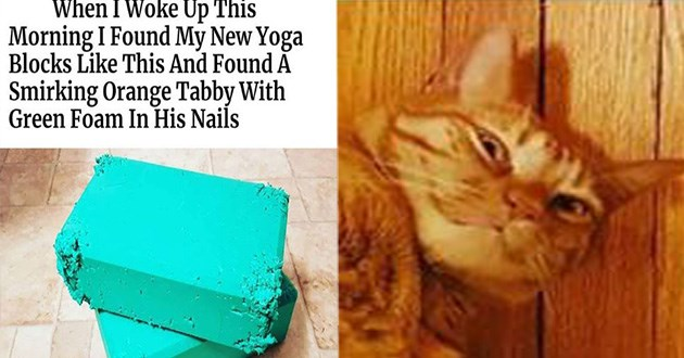 cat caturday funny memes lol | Woke Up This Morning Found My New Yoga Blocks Like This And Found Smirking Orange Tabby With Green Foam His Nails. bright green blocks crumbling at the corners and a pic of an orange cat wearing a smug expression