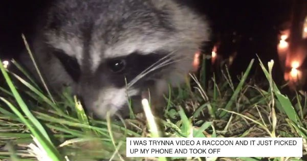 twitter,stolen,raccoon,phone,funny,thief