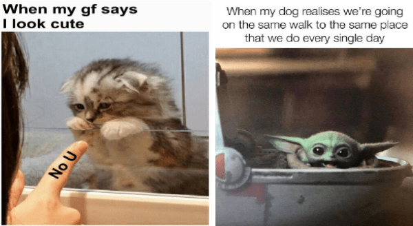 wholesome animal memes | happy baby yoda: my dog realises going on same walk same place do every single day. adorable kitten being pointed at: my gf says look cute ON U