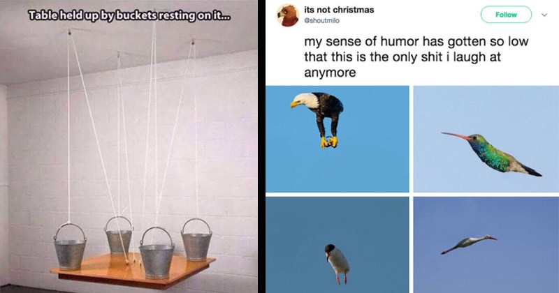Funny random memes, tweets, and Tumblr posts | four buckets resting on a table attached to strings. Table held up by buckets resting on. different birds mid flight edited without their wings