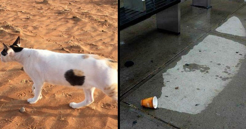 Optical illusions made by perspective | calico cat walking on sand and a spot on her coat that looks like a hole through her body. plastic cup on wet ground that looks like it spilled a dry spot out