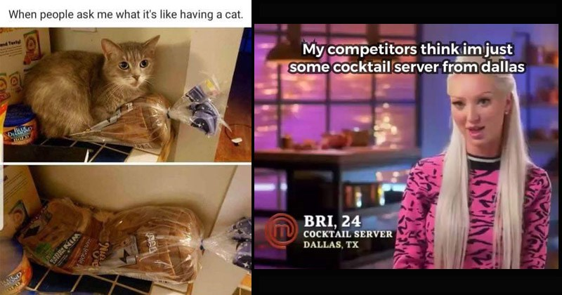 Funny memes, gifs, and Tumblr posts | pic of a cat sitting on top of a loaf of bread then pic of the cat shaped dent left in the bread: people ask like having cat. tv show competition contestant My competitors think im just some cocktail server dallas BRI, 24 COCKTAIL SERVER DALLAS, TX