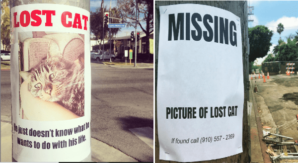 dogs missing signs Cats funny signs - 10267397