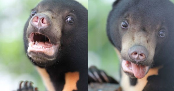 bears,cub,bear,photoshoot,silly,rescue