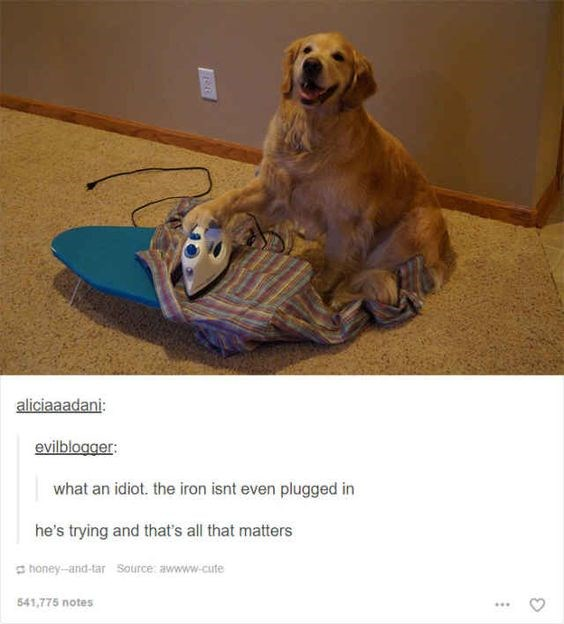 Funny tumblr posts about huskies | cute dog with its paw on an unplugged iron appearing to iron a shirt on an ironing board placed on the floor. aliciaaadani: evilblogger an idiot iron isnt even plugged he's trying and all matters