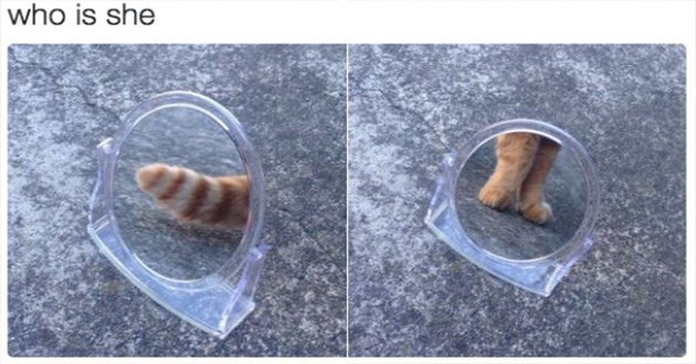 cat memes funny lol | round plastic mirror placed on the ground, in one pic its reflecting a cat's tail and in the second pic it reflects its paws. who is she.