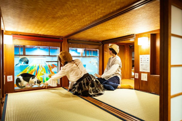 HOTEL in Japan WITH a room to cat cafe | traditional japanese room with sliding doors and a low ceiling, two people in berets sitting on the floor and reaching for a black and white cat behind a glass wall