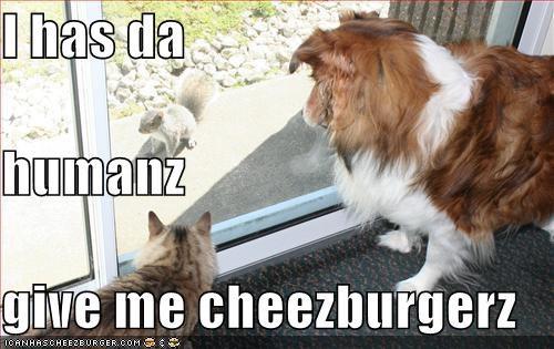 Cheezburger Image 1027771648