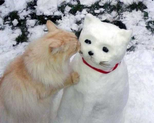 Amazing animal photos | sweet orange cat in the snow smooching a cat snowman snowcat wearing a red collar and with whiskers made of twigs