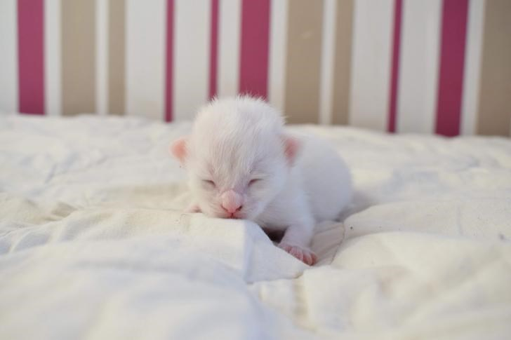 cat kitten glow up transformation beautiful aww cute animals | one week old white kitten with a pink nose tiny ears and paws closed eyes looking like a rodent