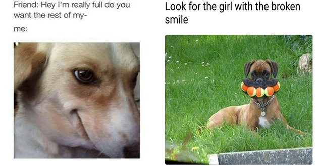 doggo dog memes funny lol | dog with a cunning expression Friend: Hey really full do want rest my. Look girl with broken smile. dog holding five tennis balls in its mouth at once.