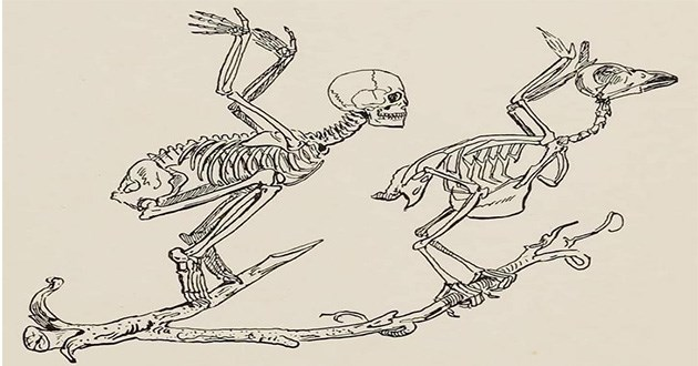 funny animals science diagrams wtf weird lol | illustration showing a human skeleton standing on a branch doing the same pose as a bird about to take off