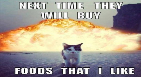 Memes of Cats getting a revenge | black and white kitten walking away from an explosion in the background: NEXT TIME THEY WILL BUY FOODS LIKE