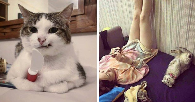 derp funny goofy cats derpy silly aww cute serious cat lol animals | funny cat grimacing showing a single fang and holding a plastic knife. cute cat copying its human and lying on its back with its legs leaning on the wall.