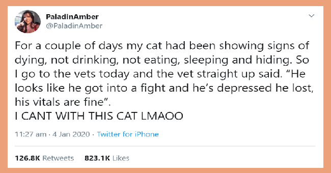 funny stories about pet owners who thought they are dying | tweet by PaladinAmber couple days my cat had been showing signs dying, not drinking, not eating, sleeping and hiding. So vets today and vet straight up said He go looks like he got into fight and he's depressed he lost, his vitals are fine CANT WITH THIS CAT LMAOO