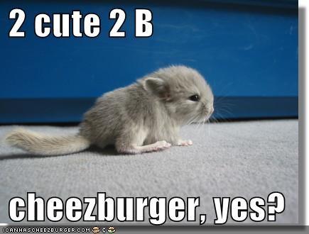 Cheezburger Image 1029947648