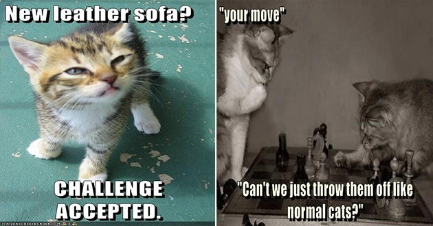 funny cats lol memes | kitten looking up with squinted eyes: New leather sofa? CHALLENGE ACCEPTED. two cats playing chess on a board:move Can't just throw them off like normal cats?