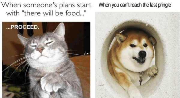 funny food memes with animas | a grey cat rubbing its paws together: someone's plans start with there will be food PROCEED. chonky dog looking through a hole: can't reach last pringle