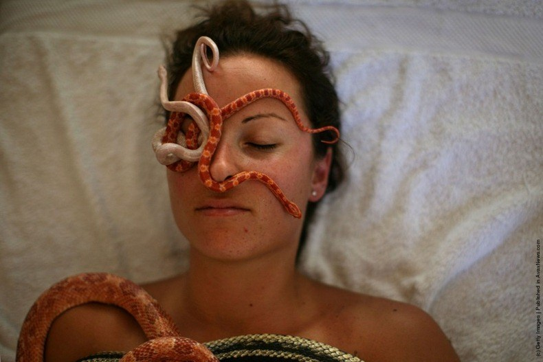 snake massage spa interesting snakes reptiles animals crazy israel | woman with dark hair lying on her back with her eyes closed, several small snakes are crawling on her face