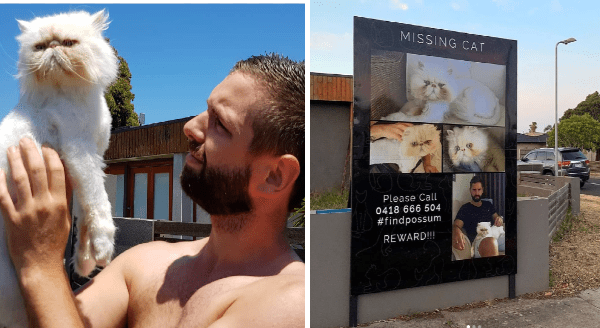 Lost cat found after six weeks thanks to giant billboards | shirtless man holding up a white grumpy cat. large sign with photos of the same cat and text that reads MISSING CAT Please Call 0418 666 504 #findpossum REWARD