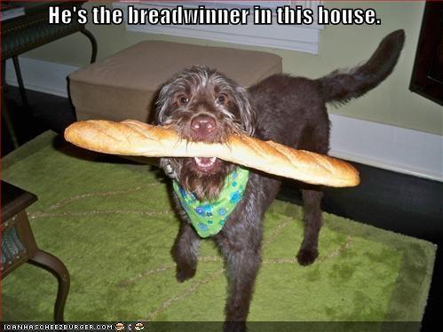 Cheezburger Image 1032806656