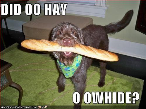 Cheezburger Image 1032826624