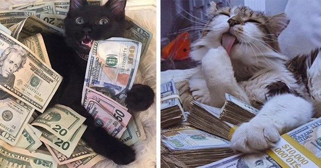 cash money cats funny cute lol aww | black cat lying in a pile of dollar bills. fluffy cat licking its paw on top of stacks of money.