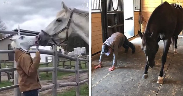 funny horses horse gifs lol animals videos cute aww pony ponies | person in unicorn mask touching snouts with a real horse. man down on fours and black horse doing a yoga pose