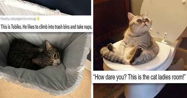 cats funny pics silly shenanigans animals aww cute lol cat   This is Tobiko. He likes to climb into trash bins and take naps. cat with white nose snuggled inside a trash can. How dare you? This is the cat ladies room. chonky cat with large round eyes sitting on a toilet
