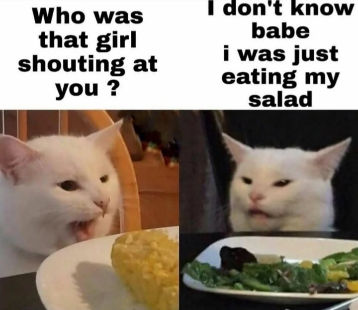 dump of funny and random memes | Animal - don't know babe just eating my salad Who girl shouting at woman yelling at cat meme