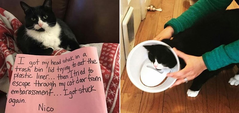 cats cat shaming funny lol animals aww cute instagram | black and white cat with a plastic ring around its neck. got my head stuck trash bin lid trying my eat plastic liner then I tried escape through my cat door embarrassment I got stuck again. Nico