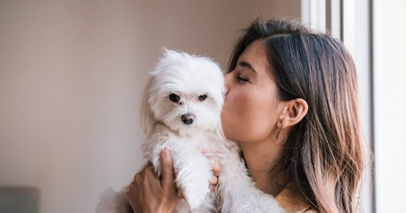 Valentine's day hotel package for you and your dog   brown haired woman holding a fluffy white dog to her face and kissing it on the cheek
