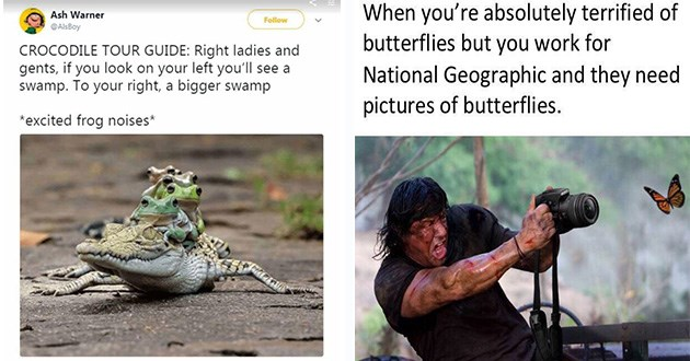 memes animals funny lol tumblr twitter tweets birb bird reptiles | tweet by AlsBoy CROCODILE TOUR GUIDE: Right ladies and gents, if look on left see swamp right bigger swamp *excited frog noises* 4 frogs riding on the back of a crocodile. rambo screaming while pointing a camera at a butterfly: absolutely terrified butterflies but work National Geographic and they need pictures butterflies.