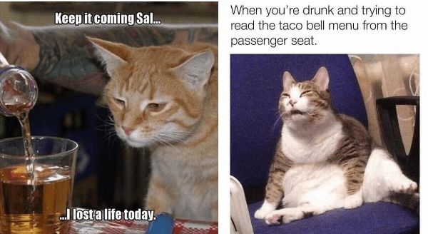 funny drunk cat memes | weary looking orange cat watching a drink being poured into a cup: Keep coming Sal. I lost a life today. cat squinting: drunk and trying read taco bell menu passenger seat.