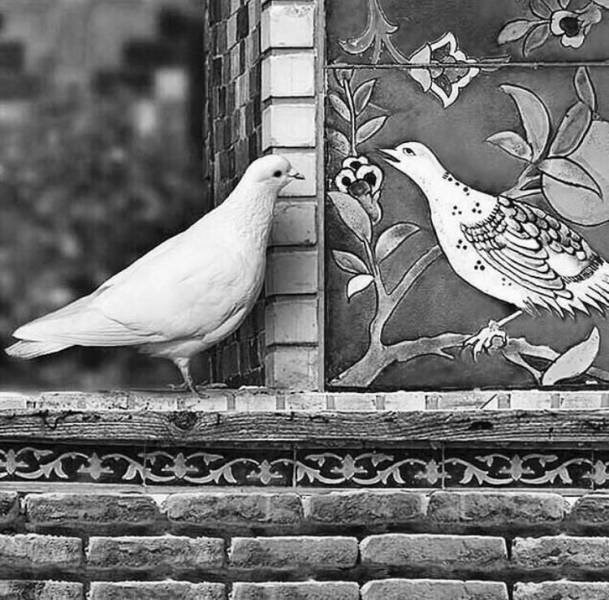 Amazing animal photos | black and white photograph of a white dove looking at a mural artwork street art of a bird on a tree branch