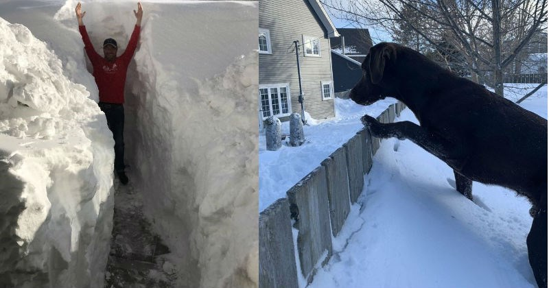 A collection of crazy images from Newfoundland's snowstorm of the century | person standing with raised arms in a narrow corridor dug through snow. black dog standing on a mound of snow and looking over a fence.