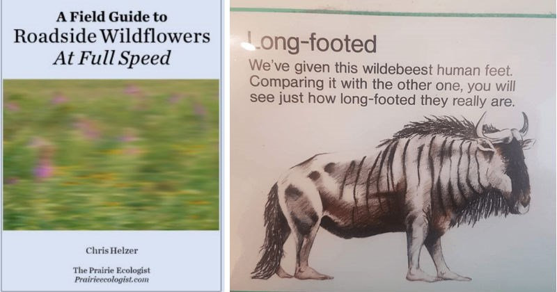 A collection of science diagrams that look like ridiculous sh*tposts | Field Guide Roadside Wildflowers At Full Speed Chris Helzer Prairie Ecologist Prairieecologist.com blurry photo of flowers. Long-footed given this wildebeest human feet. Comparing with other one will see just long-footed they really are.